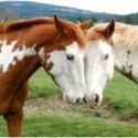 caballos - Preciosa presentación de caballos