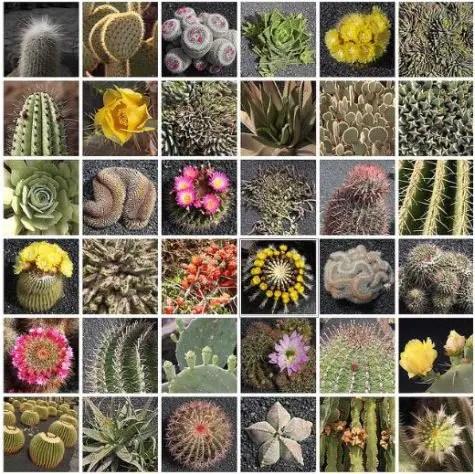 cactus - cactus