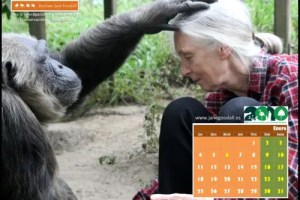 calendario instituto jane goodall enero 2010 - Calendario 2010 del Instituto Jane Goodall para tu ordenador