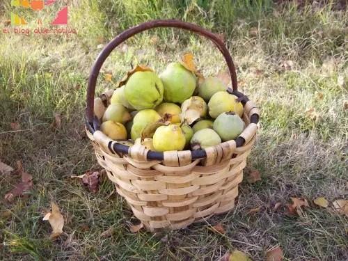 cesta membrillos - cesta de membrillos