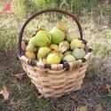 cesta membrillos - ¿Qué haríais con un cesto de membrillos?