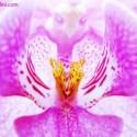 cultivar el jardin alex cipollini - Sexualidad y cultivar el jardín