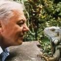"""david attenborough mirando iguana - DAVID ATTENBOROUGH: """"Hagamos lo que hagamos, no podemos detener el cambio climático, pero sí debemos impedir sus desastres"""""""