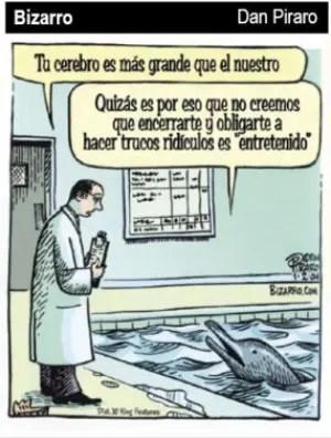 delfin - delfines