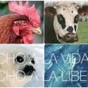 """derechos animales - Día internacional de los Derechos Animales. Manifiesto """"Tengo un sueño"""" y Vídeo"""