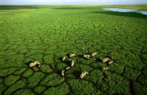 elefantes camino - camino