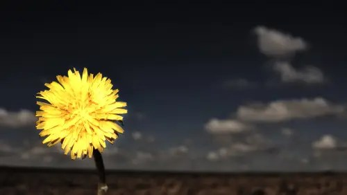 flor - flor