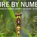 geometria2 - Nature by numbers: números, geometría y Naturaleza