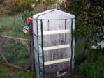 invernadero jreilly - La bitácora del huerto: el semillero