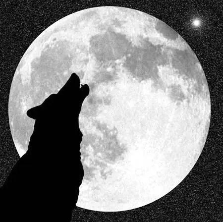 lobo 12297 - luna lobo