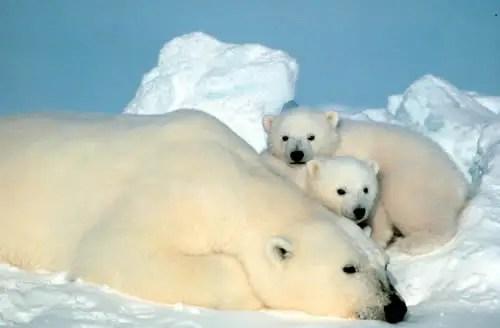 ososblancos -