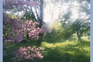 ostara forest2 - Ostara: equinoccio de primavera