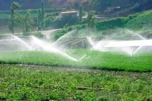 riego cultivos - Metodología para ahorrar el 50% del agua de regadío recibe el premio Norbert Gerbier-MUMM 2010