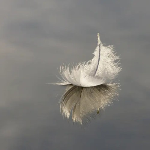 feather water - OLYMPUS DIGITAL CAMERA