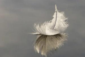 feather water - Despierta tu poeta interior: escribir con la pluma del alma