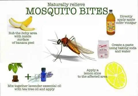 remedios caseros picaduras mosquitos