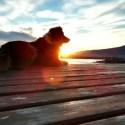 """perro1 - Una veterinaria """"diferente"""" y holística"""