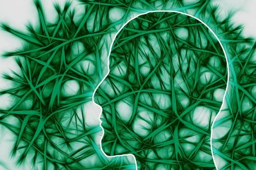 regeneración neuronal - regeneración neuronal
