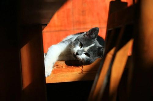 Mascotas felices y bien cuidadas - Mascotas felices y bien cuidadas