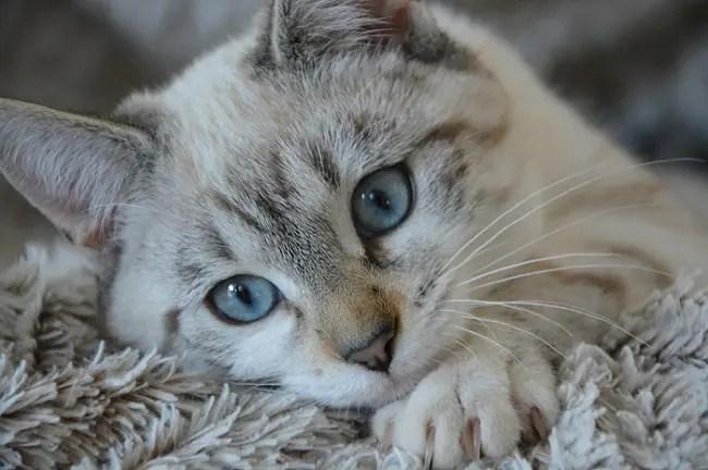 Un gato en casa - La vida teniendo mascotas en casa