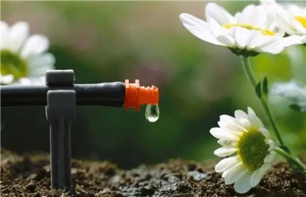 Ahorrar agua 3 - Ahorrar agua en nuestro jardín