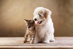 perro y gato - Mascotas Felices ¿cómo lograrlo?
