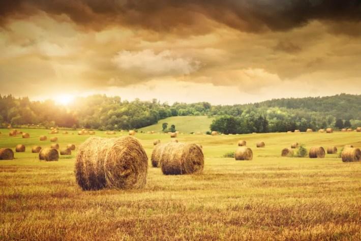 """campo trigo - """"Mientras haya tempero"""", recorriendo todo un año en el campo de la mano de Juan Pablo Ruiz"""
