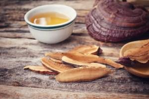 Reishi - Los 8 hongos más importantes para la salud inmunológica