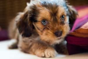 códigos descuento para perros