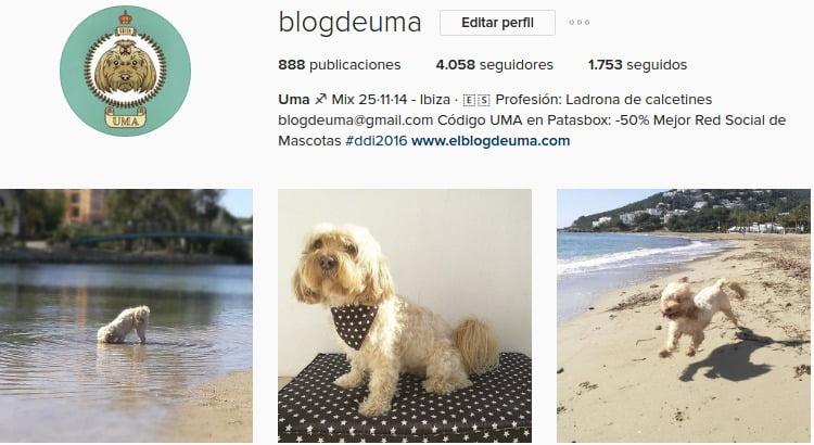 instagram para perro