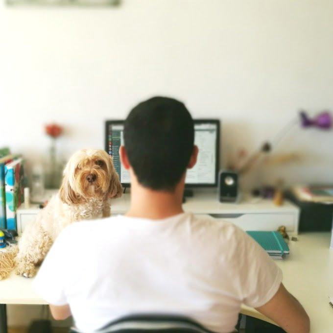 ir con perro al trabajo