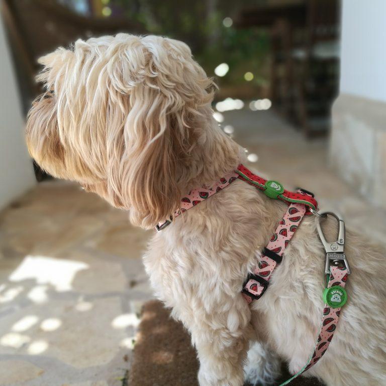 regalos para perros por Navidad