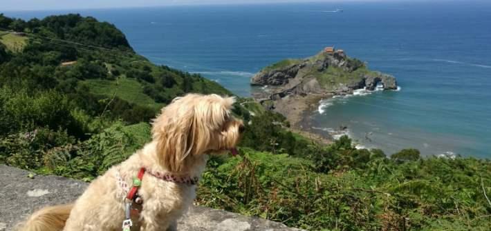 viajar con perro a Bilbao
