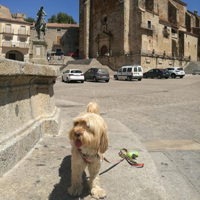 viajar con perro a Trujillo