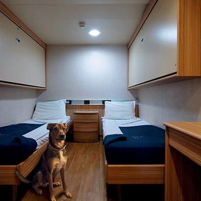 viajar con perro en camarote