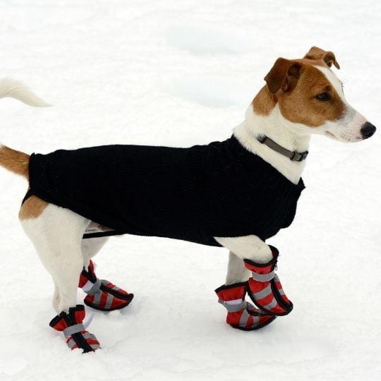 perros y nieve