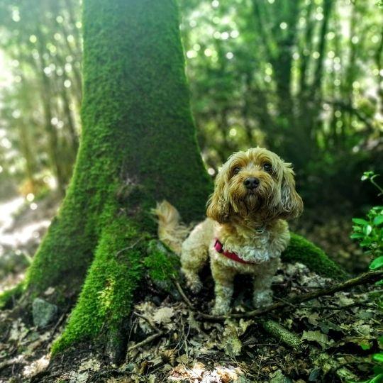 rutas con perro Andorra