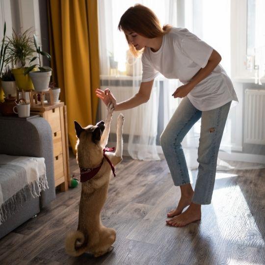 cursos de adiestramiento canino