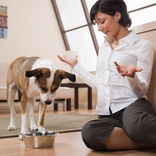 transición alimentaria en perros
