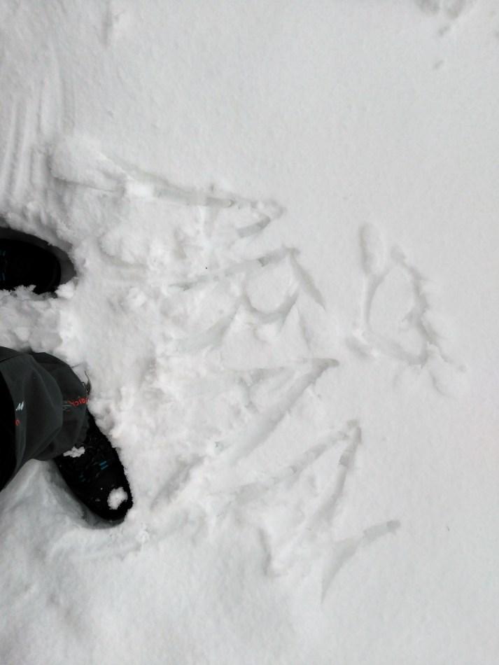 el boixar nevada allotjament rural casa refugi