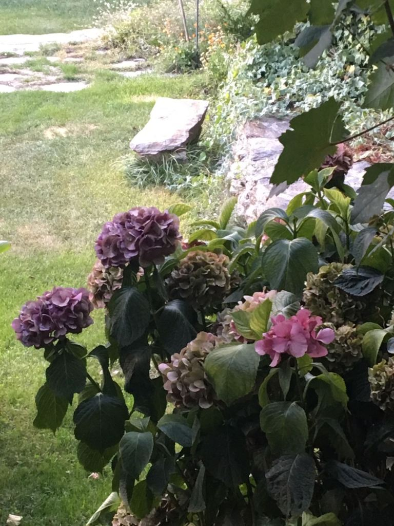 Flores Capileira