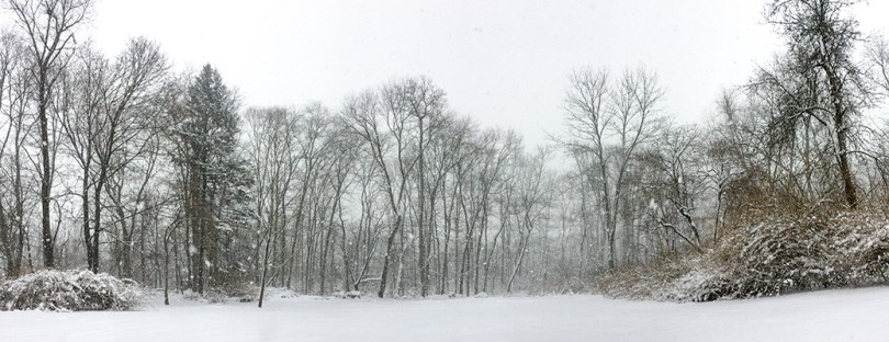 Winter in the woods of NY