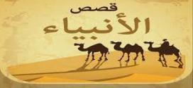قصص الانبياء  .. قصة هدهد سليمان من قصص القران الكريم