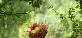 تناول التفاح والشاي يومياً يحمي من أمراض السرطان والقلب
