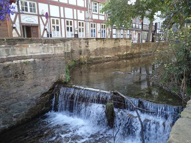 FotoArchiv Goslar  Elch on Tour