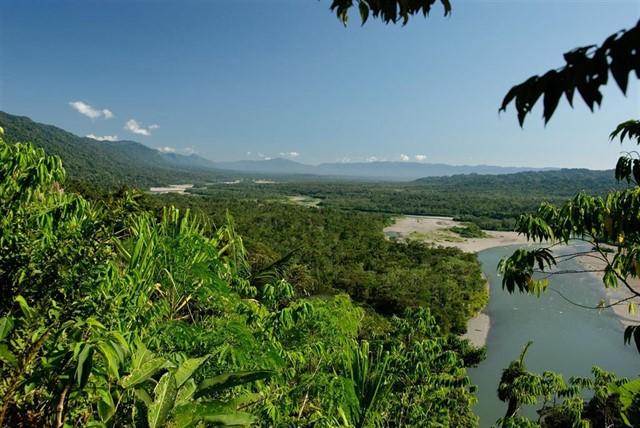 Destinan 140 millones de dólares para proteger Amazonía Peruana