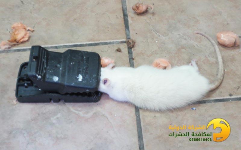مصيدة فئران قديمة