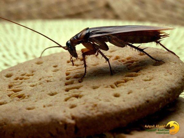شركة رش مبيدات الحشرات بجدة