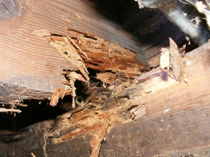 اضرار النمل الابيض على الخشب
