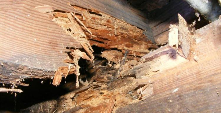شركة ابادة حشرات بجدة ومكافحة النمل الابيض